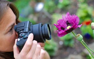 Советы для фотографов-флористов