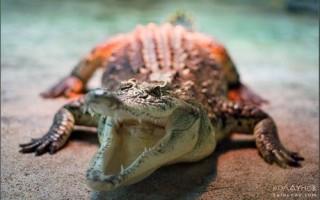 Фотографируем обитателей аквариумов и террариумов