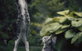 21 совет как фотографировать кошек