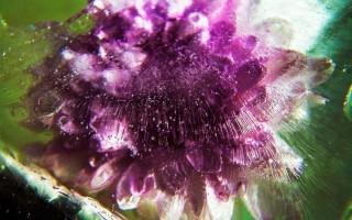 Как фотографировать замороженные цветы. Идеи для фотографии