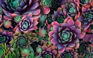 Абстрактный цветок Фотография Советы