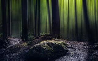 Урок по Фотошоп, как создать фантазийный лес