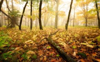 Как фотографировать осенние пейзажи