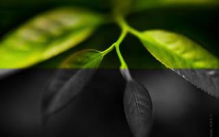 Черно-белая или цветная фотография?