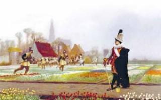 Тюльпаны по-голландски