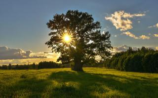 Как делать отличные фото повседневной жизни с естественным светом