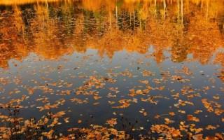 Фотосъемка осеннего пейзажа